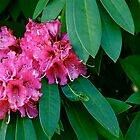 Stourhead Flower by pixiella
