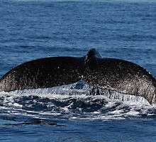 Whale Tail by Steve Bulford