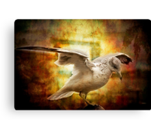 Where are you going, gull? Canvas Print