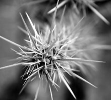 Cactus Close-up No. 1 by Benjamin Padgett