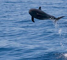 Jumping Dolphin by Steve Bulford