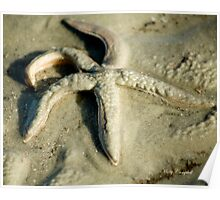 Starfish in the Sand Poster