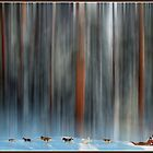 Dogsled in Douglas Fir Mindscape by Wayne King