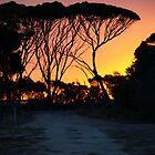 Fire Skies by leannemuller