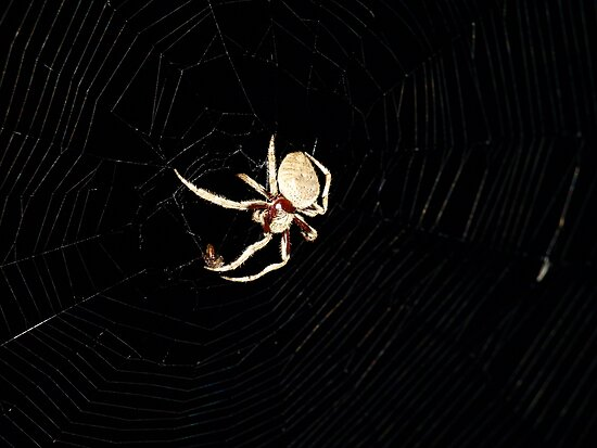 The Orb Web Master by leannemuller