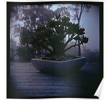 Holga madness..... little bonsai in daniland Poster