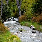 New Zealand Stream by Adrian Alford Photography