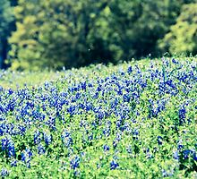 Bluebonnet Field by AineKendall