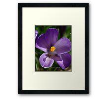 Purple Spring Flower Framed Print