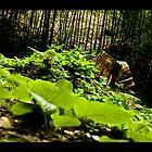 Green by CadavreExquis