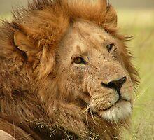 lion by janik