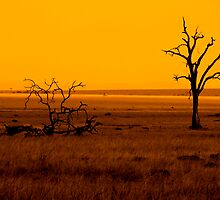 dead trees by janik