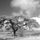 Old Pinoin Tree by DanTheBugleMan