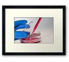Cell cultures in Petri dishes Framed Print
