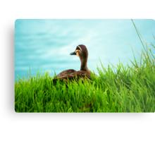 Duck in the Grass - Stephenson Park, Mount Barker, South Australia Metal Print