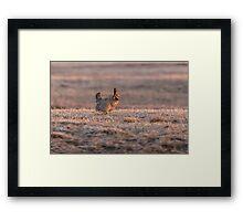 Prairie Chicken 2013-10 Framed Print