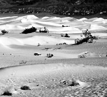 Sand Dunes, Death Valley by Benjamin Padgett
