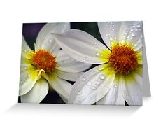 Two. Greeting Card
