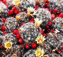 Flowering Cactus by Kathleen Struckle