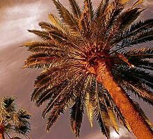 Sun Kissed Palms by Julie Marks