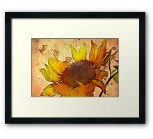 Helianthus Framed Print