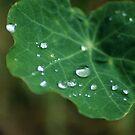 Dew drops by Mel Preston