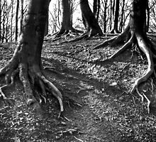 Big Feet by Andy Harris