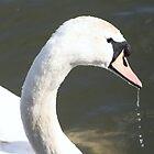 Swan by Robert Deaton