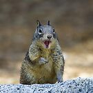 Squirrel_8657 by steini