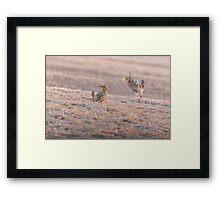 Chicken Fight Framed Print