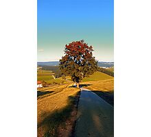 Roadside tree in indian summer colors   landscape photography Photographic Print