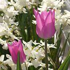 beautiful spring by ZELLEN