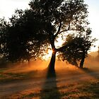 Morning shadows... On the foot of the Majuba Mountain, Natal, South Africa. by Qnita