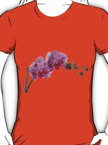 Purple Phaleanopsis Orchid on white background T-Shirt