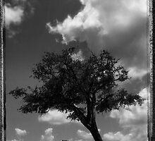 Analog tree by Jean-François Dupuis