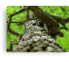 Taking Tree Climbing to the Next Level Canvas Print