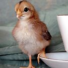 Bantam Chick by angelandspot