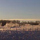 Alberta 2015 by Kathi Arnell