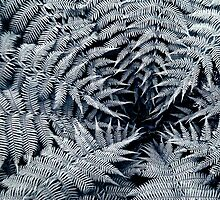Fern, Cataract Gorge, Tasmania by Cameron Gray