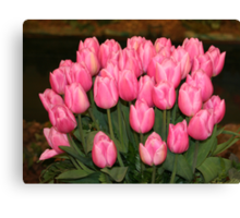 """""""Pink Tulips"""" Canvas Print"""