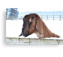 Snowy Goat Canvas Print