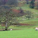 Grazin' at Grasmere by Harry Oldmeadow