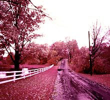 Infrared landscape. Easton, Connecticut, fall 1973 by Daniel Sorine