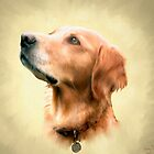 Ellie the dog by Barry Thomas