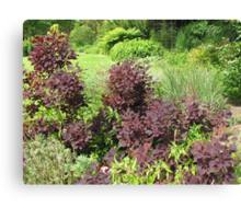 Shrubs with Copper Coloured Leaves - Hyde Hall, Essex Canvas Print