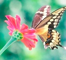 Butterfly Kiss by Mary Campbell