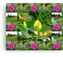 Hyde Hall Collage Featuring Wild Rose and Irises Canvas Print