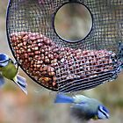 Blue Tits on the feeder... by lynn carter