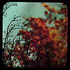 autumn viewfinder by Shannon Clough