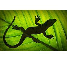 Flat Out Like a Lizard . . . . . . . Photographic Print